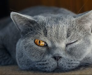 Питание стерилизованных кошек