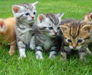 Какую кошку выбрать? На что обратить внимание