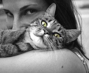 Ласковые породы кошек